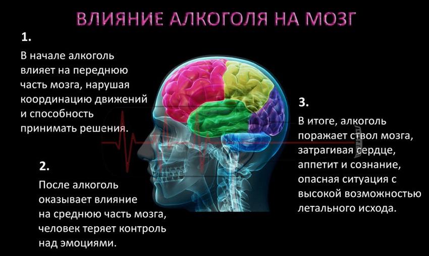Мозг после алкоголя