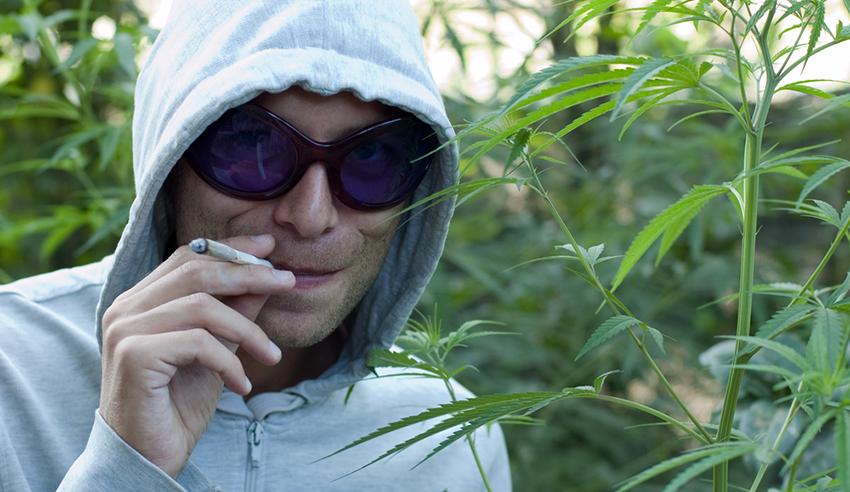 Фото человек и конопля линда ст марихуана слушать