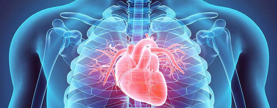Влияние наркотиков на сердце и сосуды